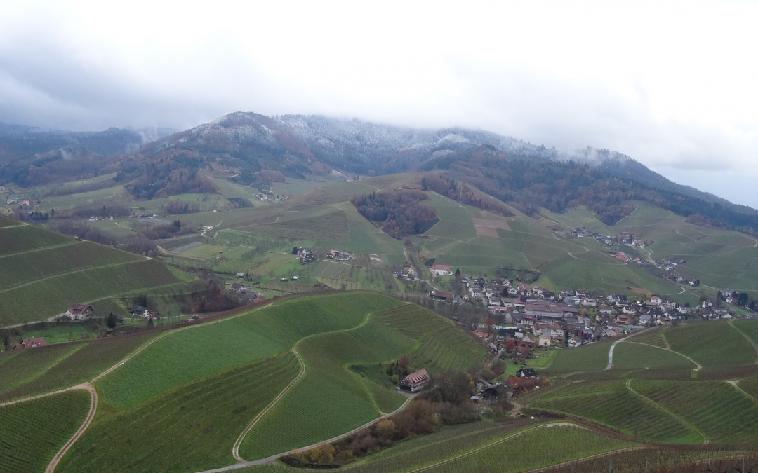 Durbacher Weinpanorama
